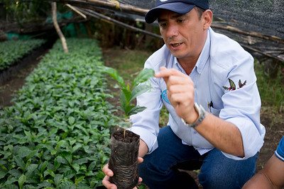 Pedro at the nursery of Finca El Balso
