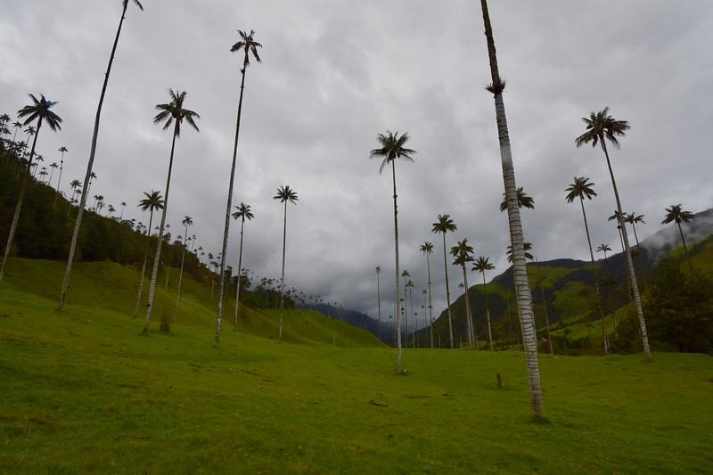 Cocora Valley, Quindio, Colombia