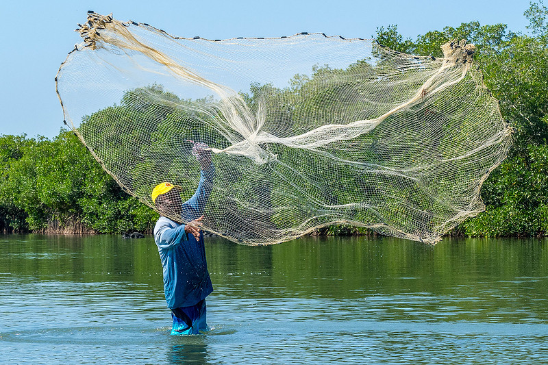 A fisherman casting his net for bait fish.