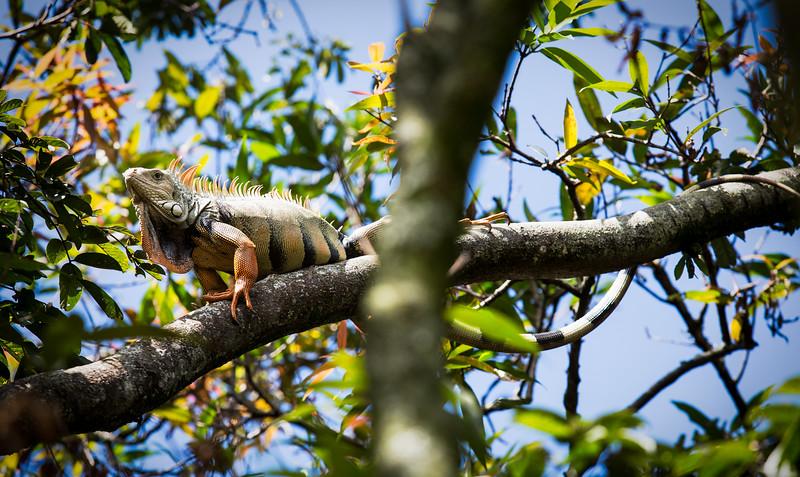 wildlife - Colombia