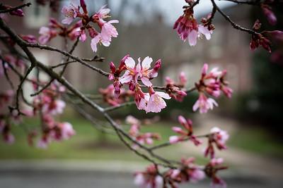 Williamsburg Spring 2020