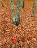 Autumn, Sonoma County