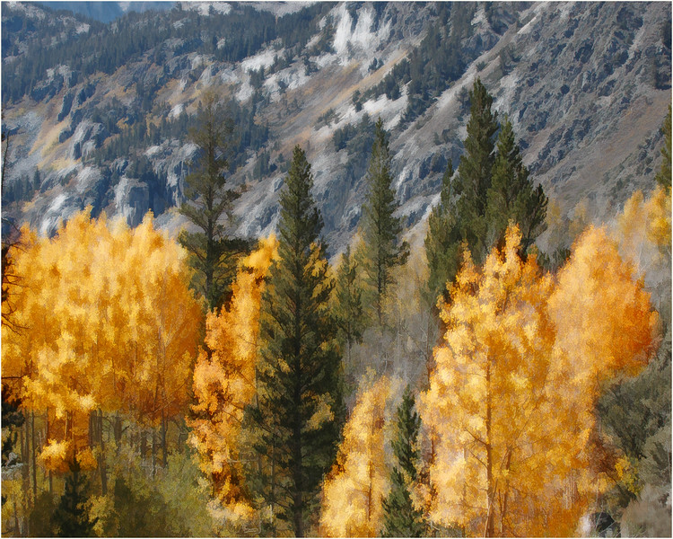 Fall Colours, Eastern Sierras