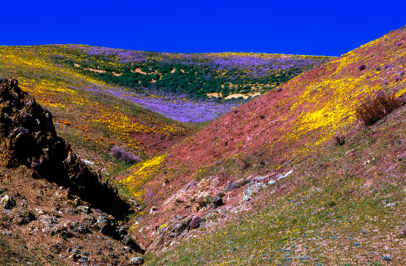 Gorman Hills in Bloom