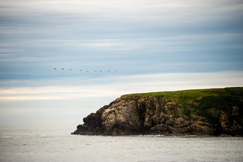 Nine Pelicans