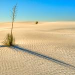 Yucca Shadow