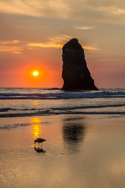 Gull and Needle, Sunset
