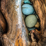 Drift Wood with Blue Rocks