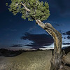 Lone Juniper - Joshua Tree National Park