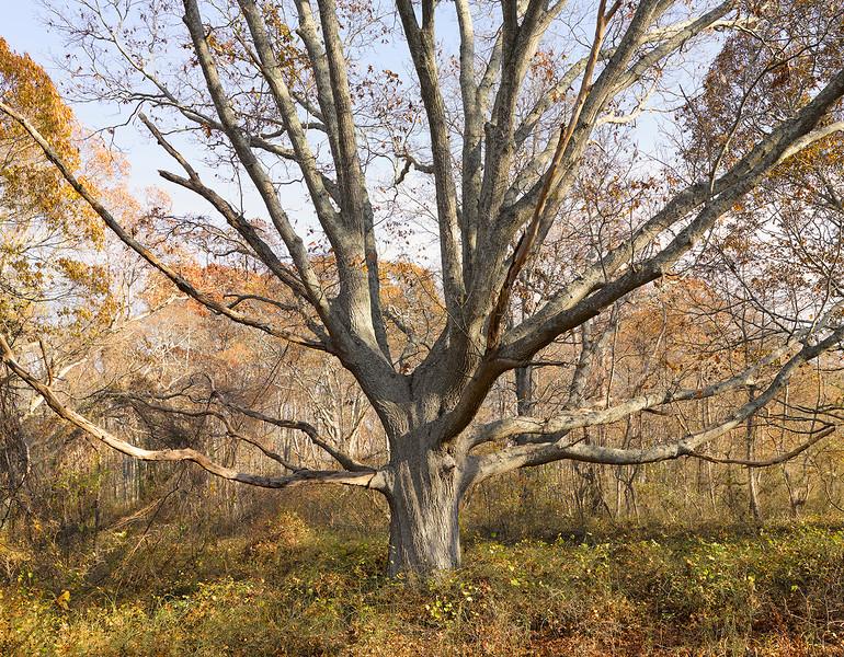 Family Tree In Fall