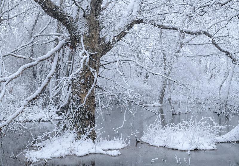 The Last Snow fall