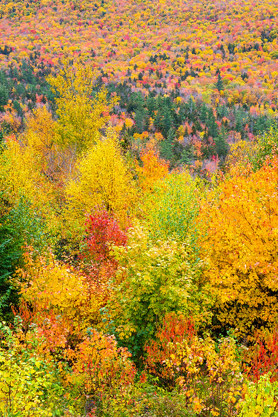 Fall Tapestry, White Mountains