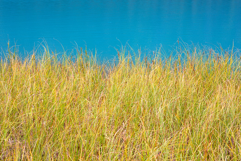 Yellow Grass and Turquoise Water