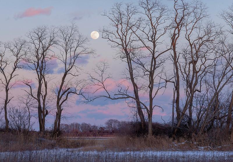 Moon Over Orient Fields