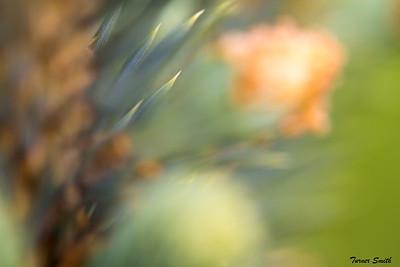Soft Thorn