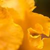 Yellow Folds
