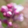 Swaying Pink