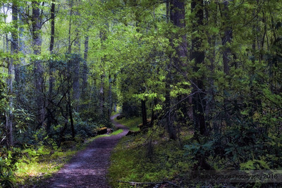 The Path Home Cataloochee 4-30-16