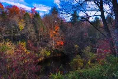 Falls Last Flash of Color on East Fork