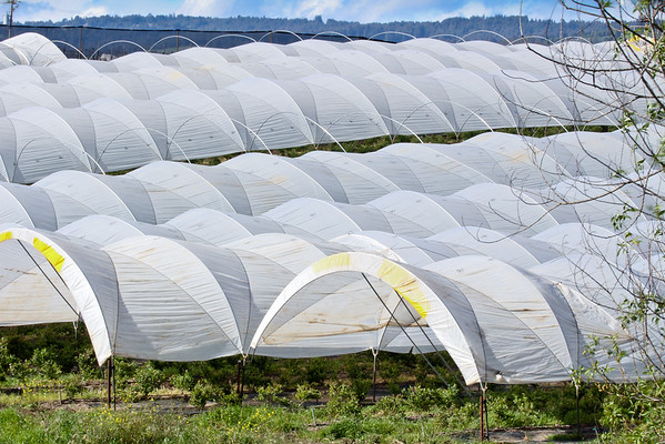 White Grow Houses in Watsonville, CA