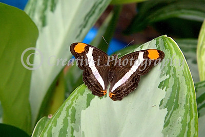 Butterfly- Detroit Zoo 01