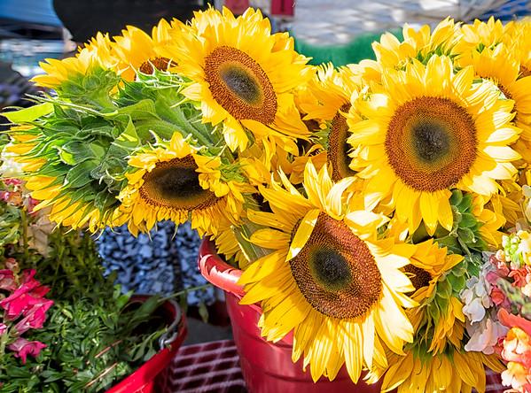 Sunflowers etc.