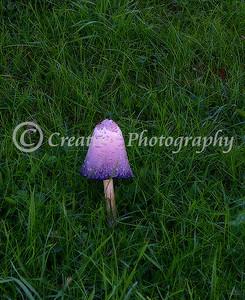 mushroom at dusk