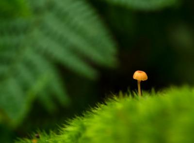 Small Mushroom 3