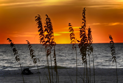 Seaoats and Sunset