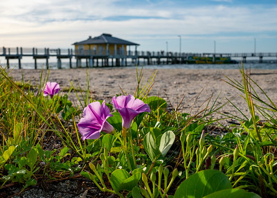 Beach Flowers at Fort DeSoto