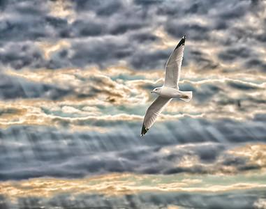 Gull in Colorful Sky