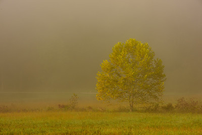 Autumn in Cade Cove