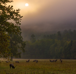 Sunrise In Cataloochee #2