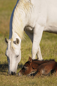 Foal and Mare Rocking M Ranch