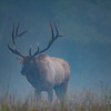 Elk in the Fog