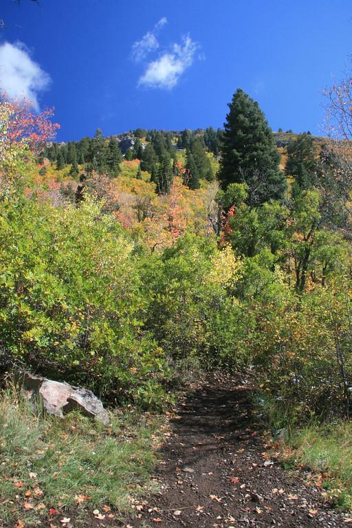 Pine Creek TH   American Fork Canyon