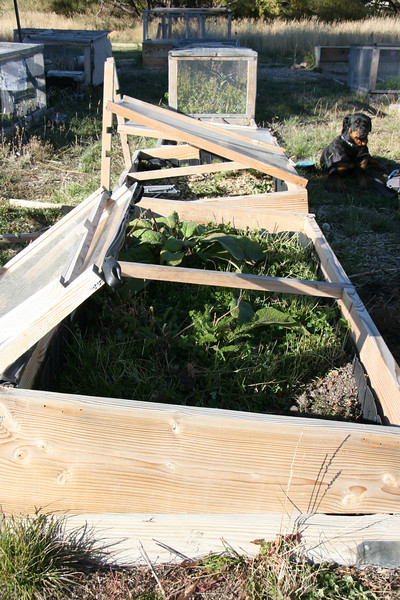 Coldframe Window time