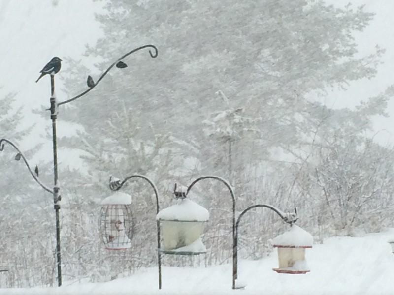 Groundhog Day Snow Storm 02/02/16