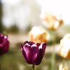"<a href=""http://www.canstockphoto.com?r=191578""><b>Royalty Free Images at Can Stock Photo</b></a>"