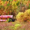 autumn - original