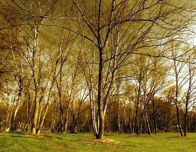 tree epics - large