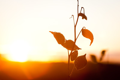 20120204_sunset-7228