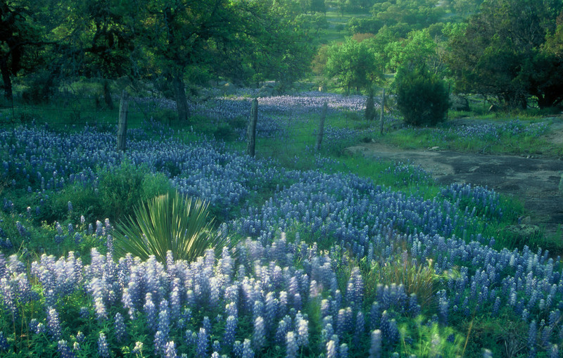 """Texas Hill Country Blues"""