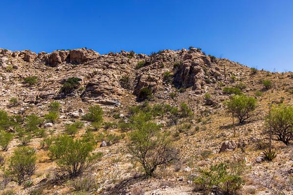 Lush Forest in the Arizona Desert