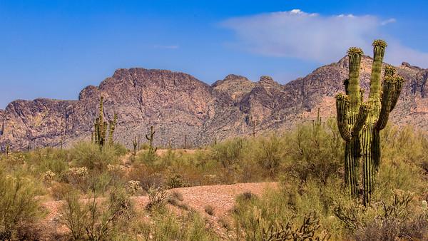 Baked Desert Moments