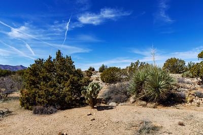 Representing Desert Life