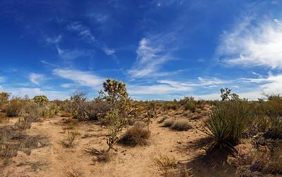 Desert Life, Desert Sands