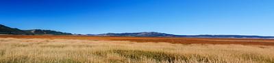 Sea of Summer Grass