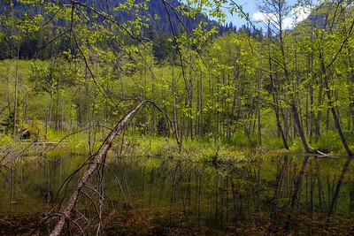 Springtime Means Swamptime