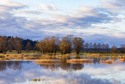 Evening Reflections Along the Nisqually